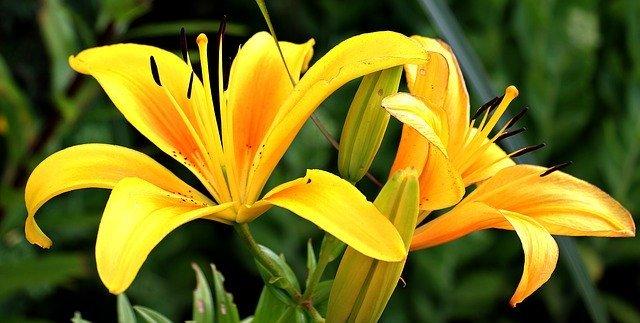Kolorowe kwiaty, kwiaciarnia jelenia góra, kwiaty jelenia góra
